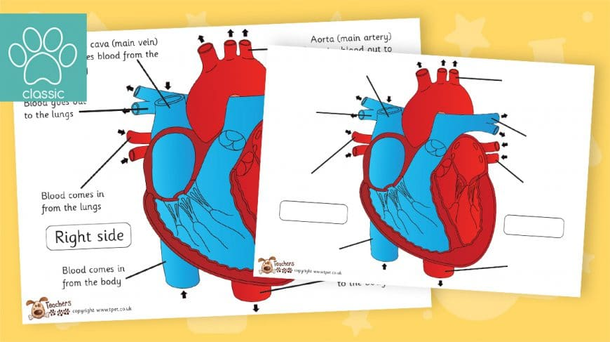 heart labelling