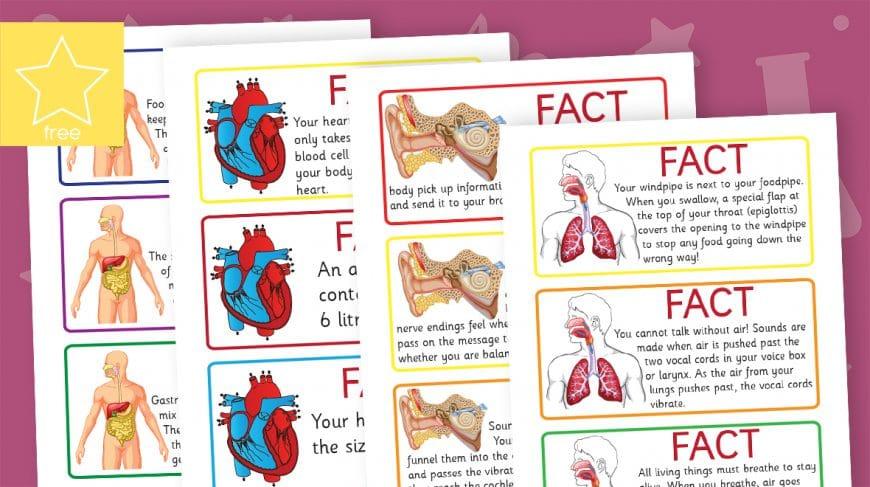 human body fact cards