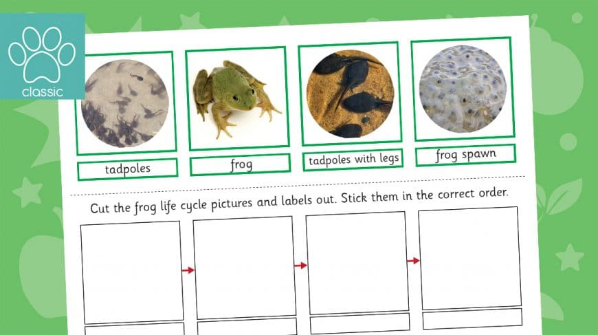 frog life cycle sorting activity