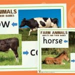Farm Animals and their Babies Posters