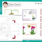 Plant Life Cycle – Cut and Sort